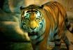 Tony the Tiger?