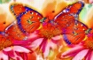 Butterfly Abstrac...