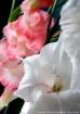 White Mood & Pink...