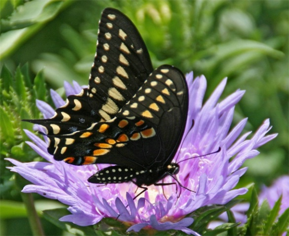 Summer Fun Is Capturing Butterflies With A Camera