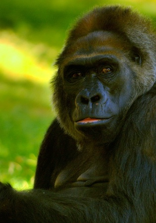 A Most Noble Primate