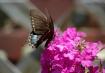 """""""Butterfly..."""
