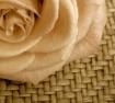 Rosepia