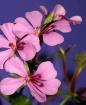 Basket Blooms