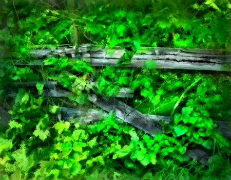 Green Fence