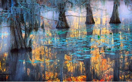 Caddo Lake Mystique