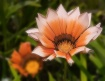 Lovely petals