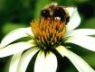 Buszzzzzzzy Bee