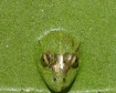 Frog....