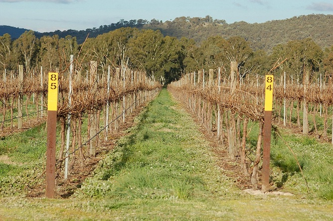 Vineyard preparing for the growing season