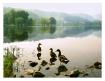 - Cove Lake Morni...