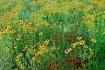 Summer Wildflower...