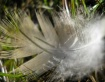 Feather 208