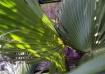 Plant #9