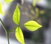 Plant #11