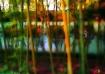 bamboo in a class...