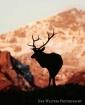Rocky Mountain El...