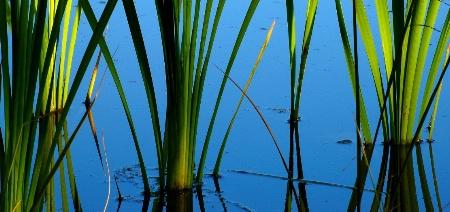 Calm Pond