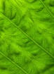 Rainforest Design