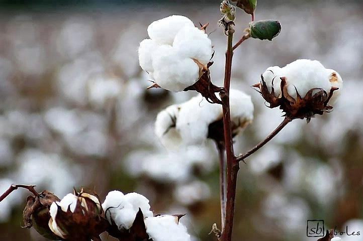 In Fields of White