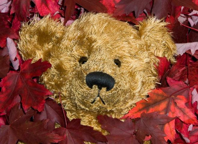 Bearied in Leaves
