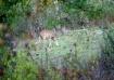 Deer Waiting....