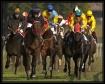 Galop race