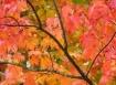 Paint it Fall