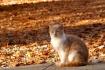 Furry Fall Feline