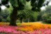 Orton Floral Drea...