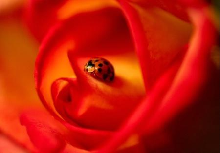 Ladybug, Ladybug, #4