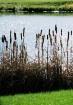 Autum Pond#1