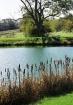 Autum Pond#3