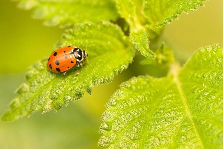 A Lady Bug
