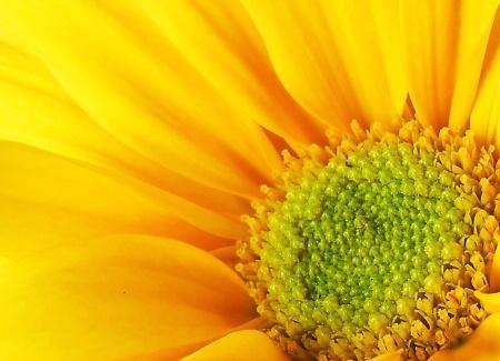 Botanical Sun