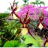 © Muriel Soler PhotoID# 2906070: Orchids, Hawaii, HI