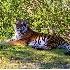 © Muriel Soler PhotoID# 2906149: Enjoying shade, Miami zoo, Miami, FL