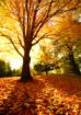 Early Autumn Morn...