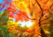 Autumn Sky Palett...