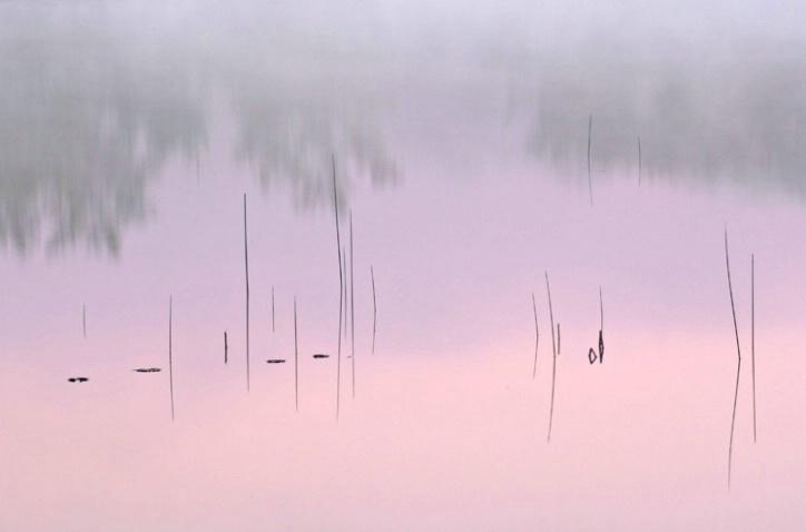 Reeds at Dawn Hall Lake