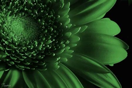 Petals of Green