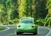 A Green Bug