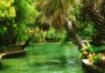In a green dream....