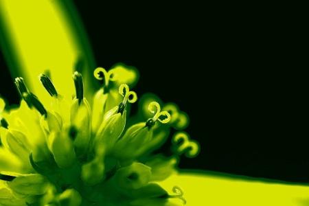 CORNERED IN GREEN  14295
