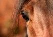 Eye of Amadorr