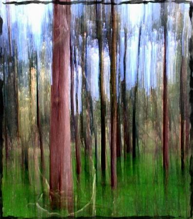 Among Tall Cedars