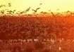 Bosque Dawn