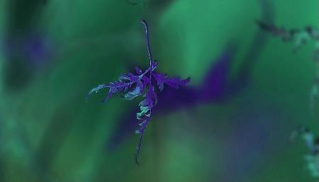 Descent of the Leaf Spirit