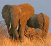 Tembo Family