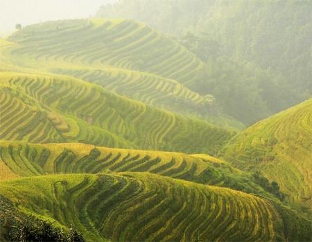 Rice Terraces of Long Ji